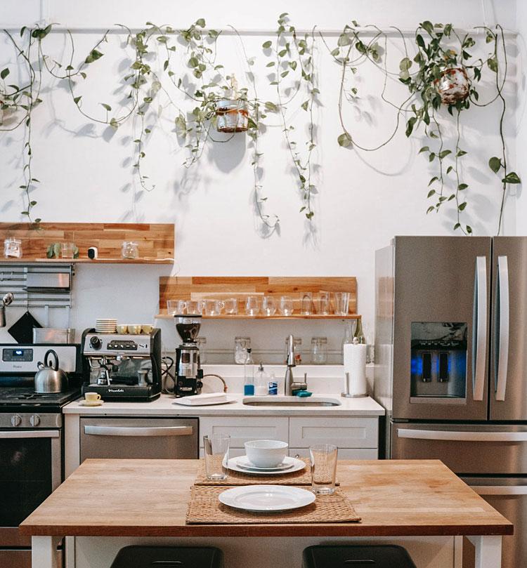 ozdobne rośliny w kuchni
